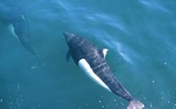 Wildlife | Prince William Sound | Phillips Cruises